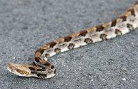 image rattlesnake-jpg